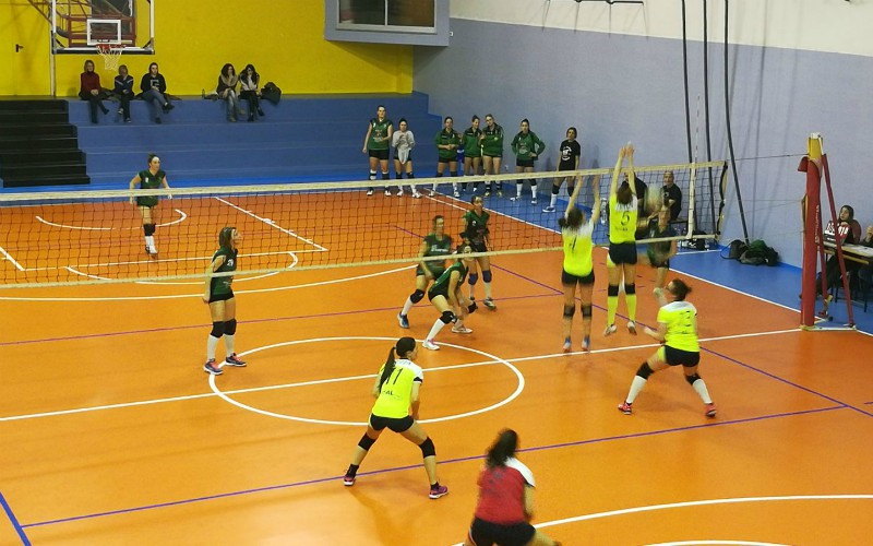 volley csi